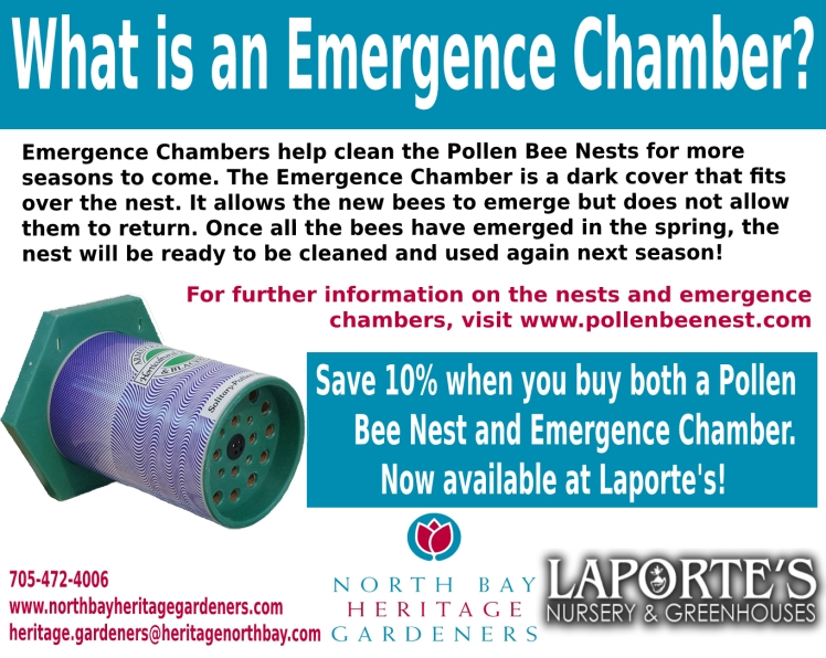 Emergence Chamber Card Final